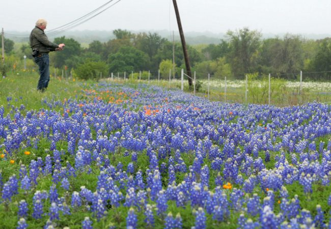 Piet Oudolf photographing wildflowers in the Texas Hill Country.