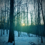 Snowy Woods Sunset