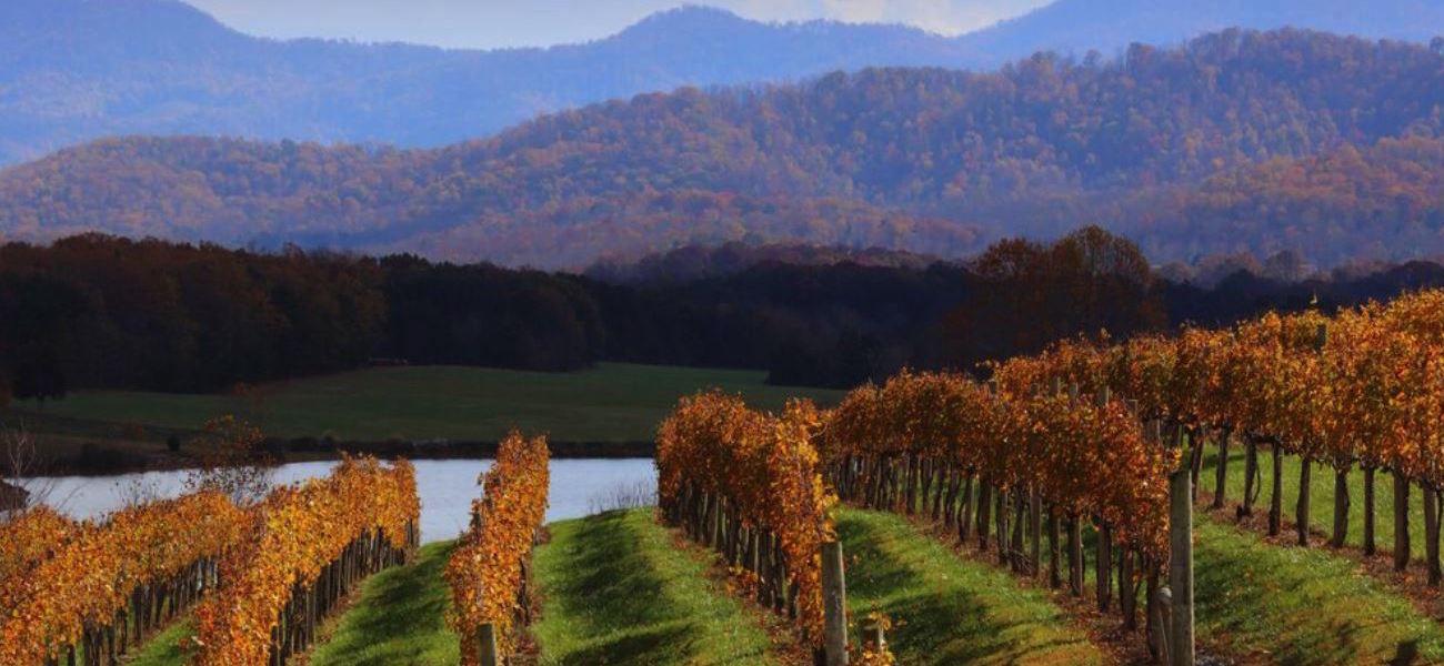October wine banner