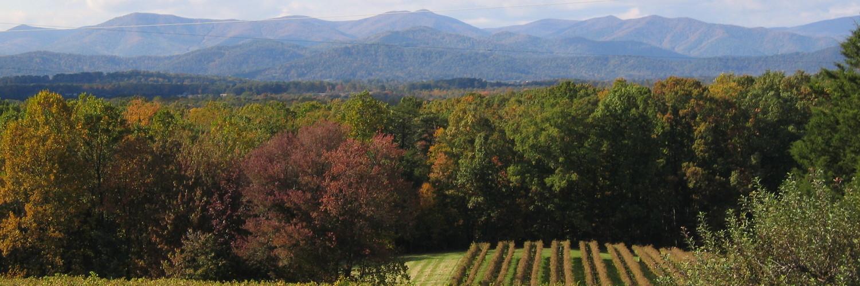 Horton vineyard with mountains