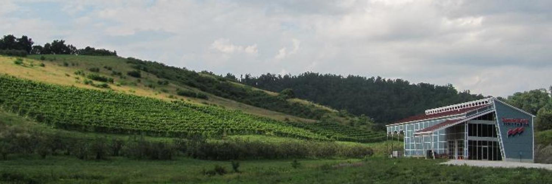 Tastingroomlandscape