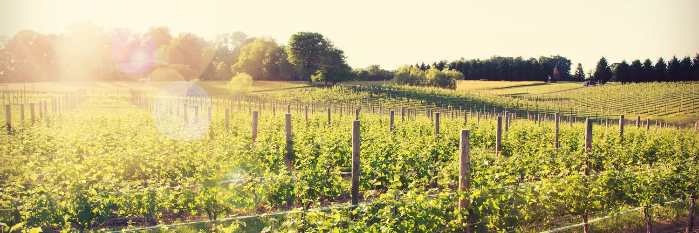 8 chains vineyard va wine