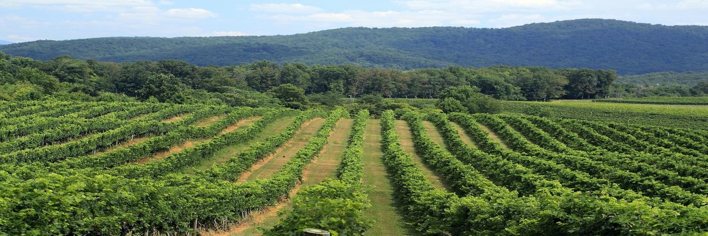 Grace Estate Winery Virginia Wine