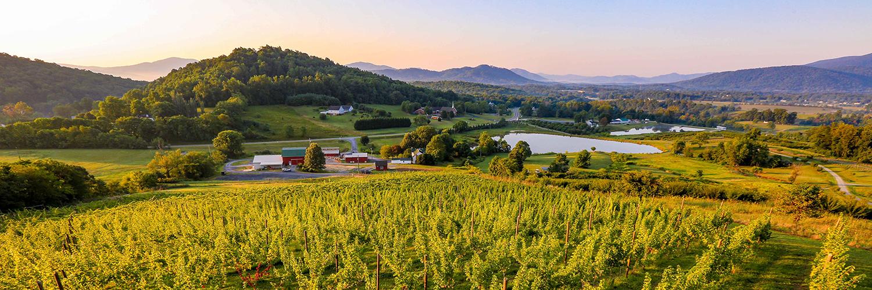 170820 vrv stock vineyard 0074 300dpi vawine