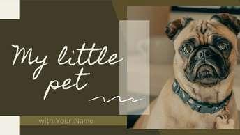 my little pet