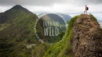 Youtube_Covers_IntotheWild