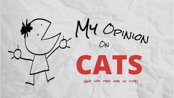 My Opinion on Cats