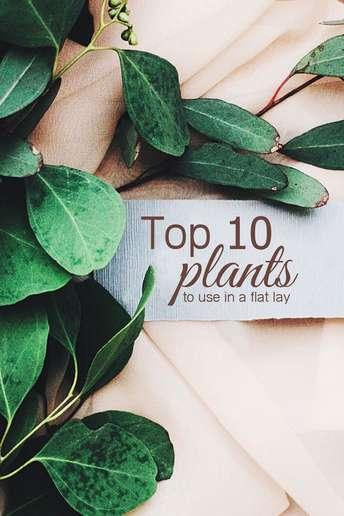 Top 10 plants