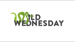 Wildwednesday gray