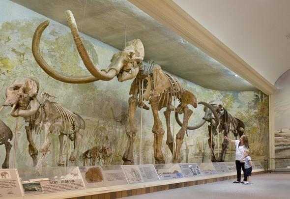 Jackson Mississippi Natural History Museum