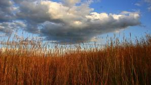 Img 3048 beautiful bluestem sky paul johnsgard 9 08