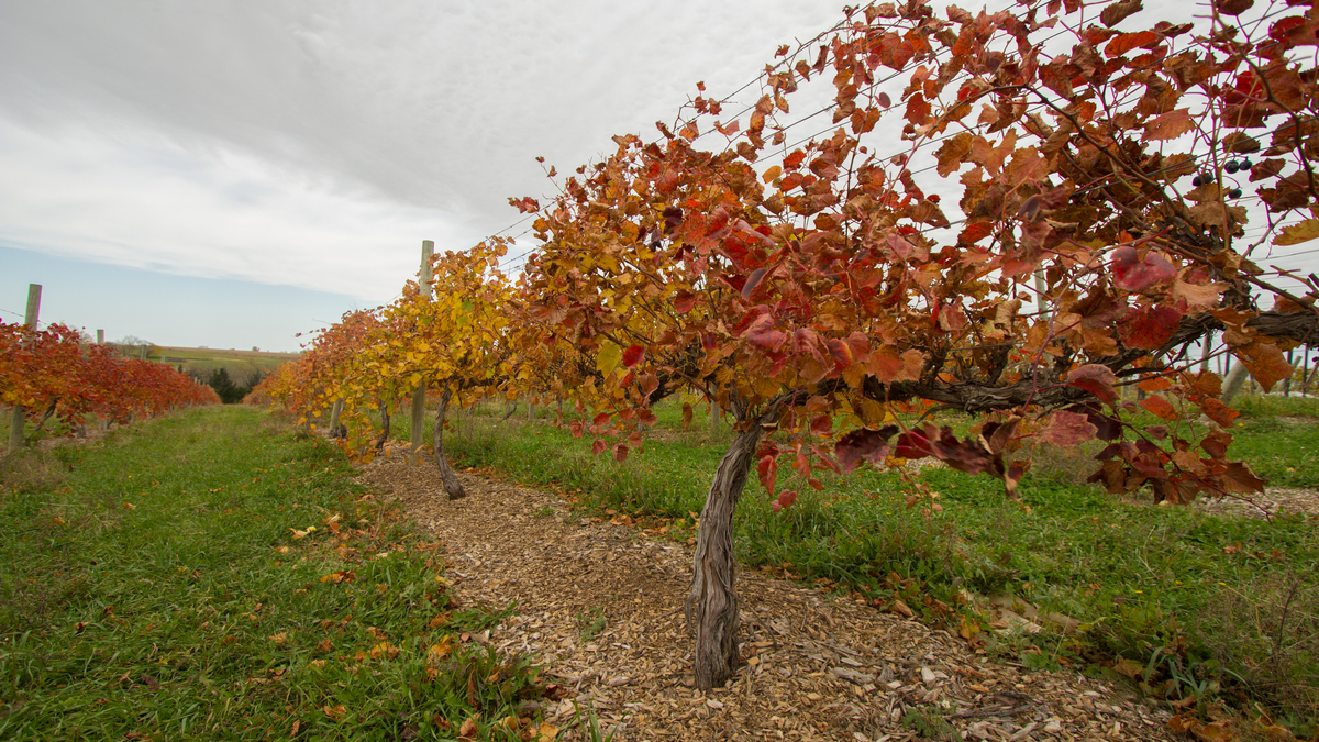 glacial till vineyard u0026 winery