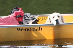 dog, canoe