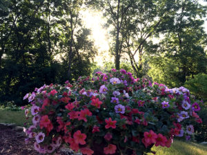 Garden tour Winona Minnesota flowers Women's Resource Center