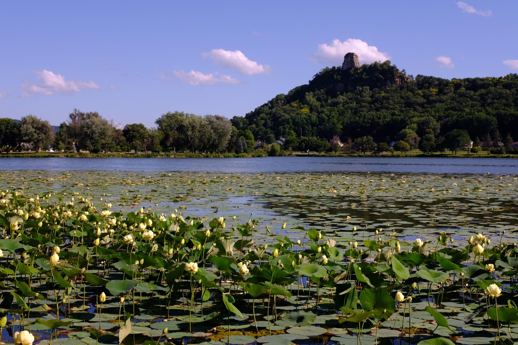 Lake Winona Lilypads Sugarloaf Bluff Southeastern Minnesota Driftless Area