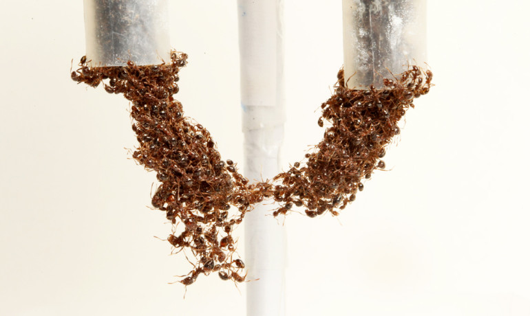 ant_bridge_1170-770x460