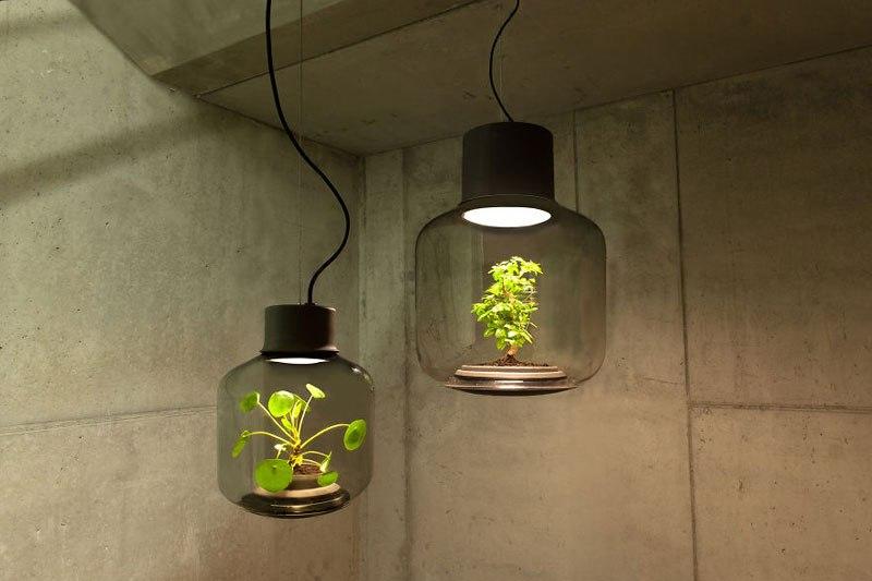 Plant Lamp 1
