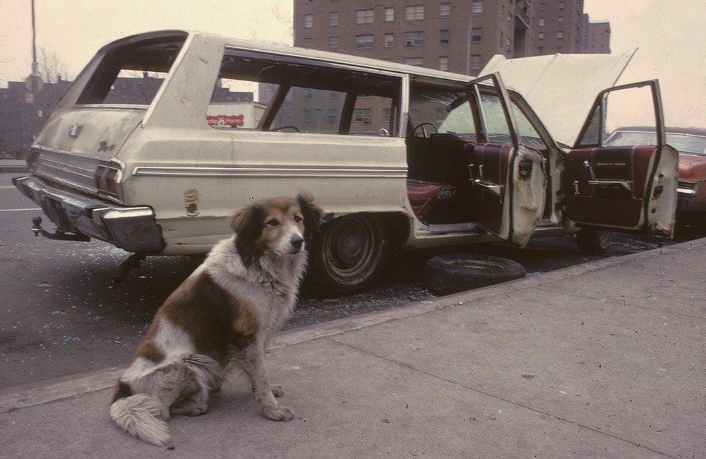 Steven Siegel NYC Wasteland 3