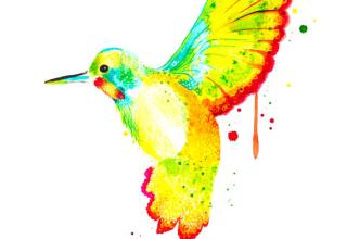 colorful hummingbird