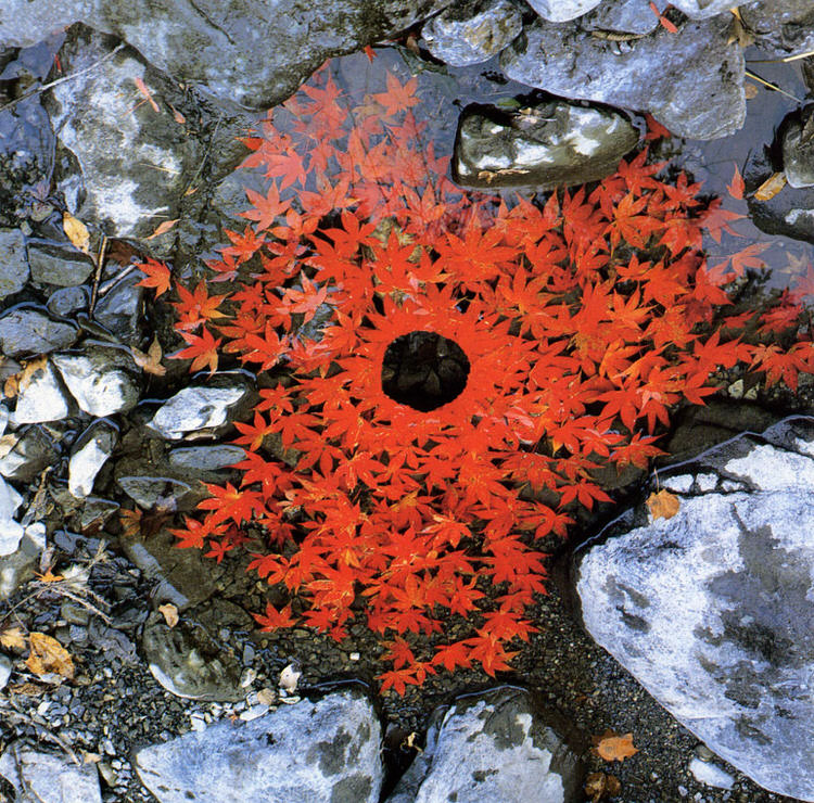 Nature Art, by Andy Goldsworthy
