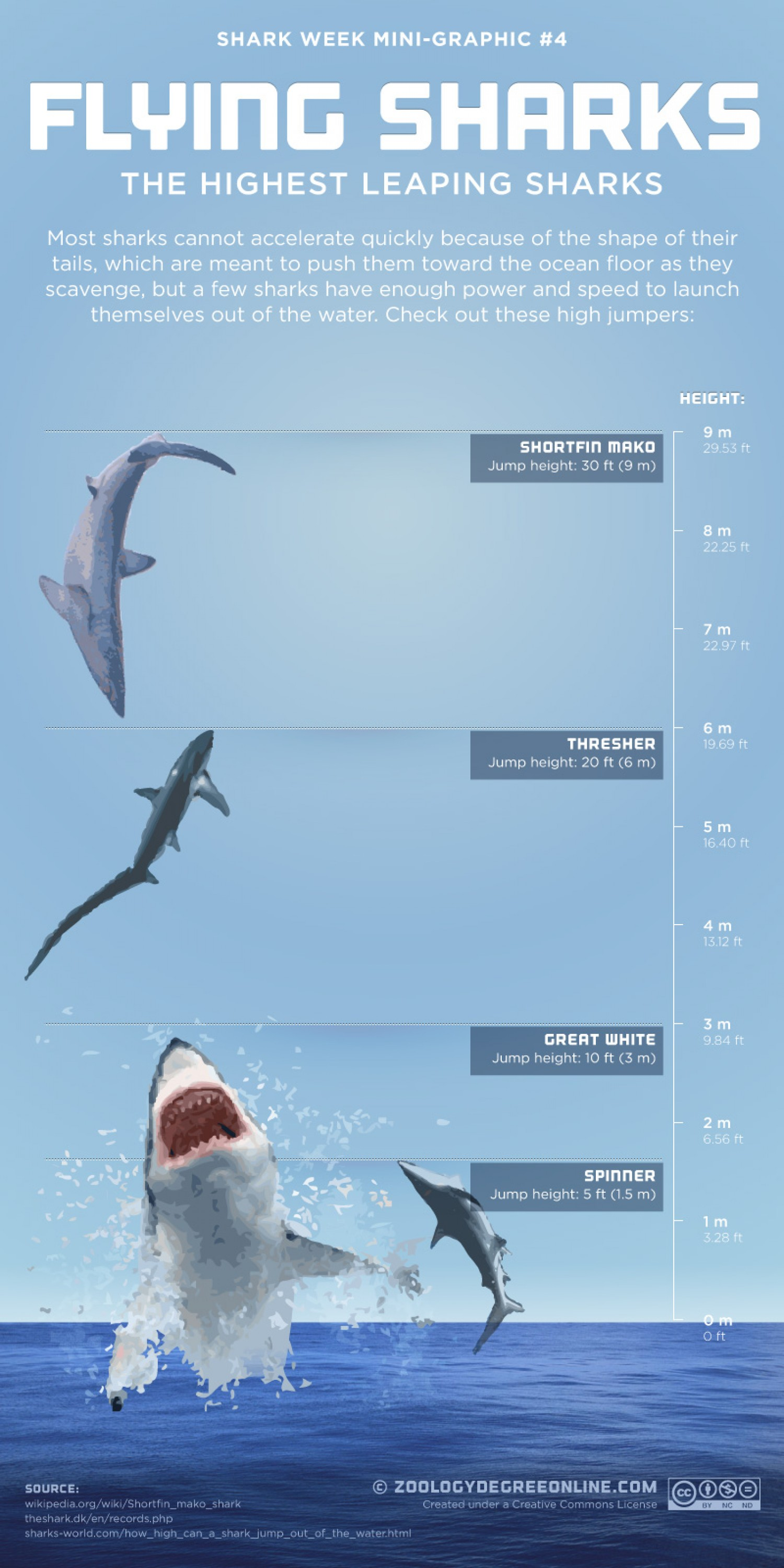 Flying Sharks Infographic