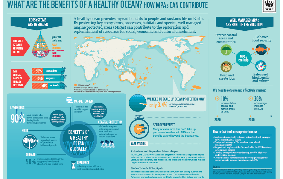 What Are The Benefits Of A Healthy Ocean Infographic