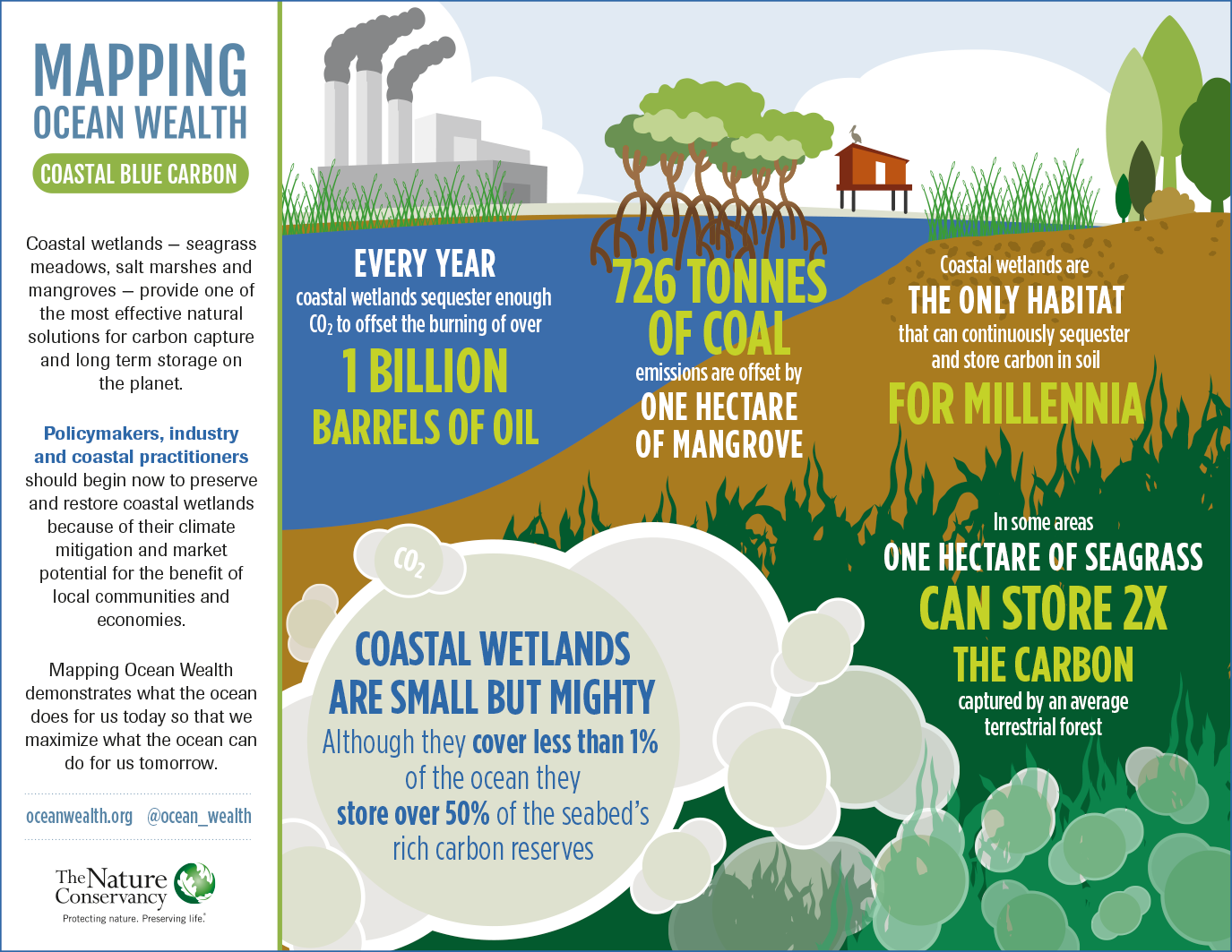 Coastal Blue Carbon Infographic