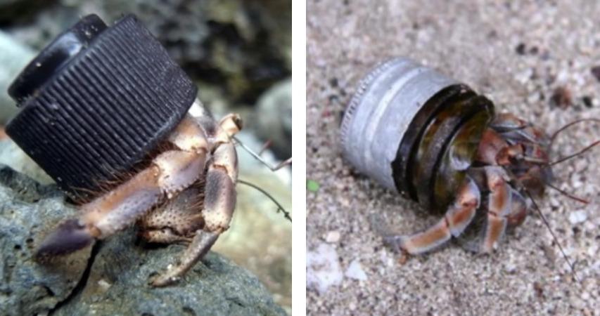 real estate hermit crab campaign