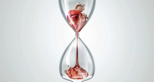organ transplant ad heart
