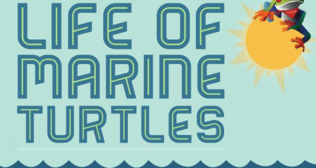 turtles infographic