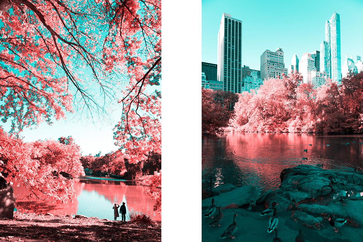 Central Park5