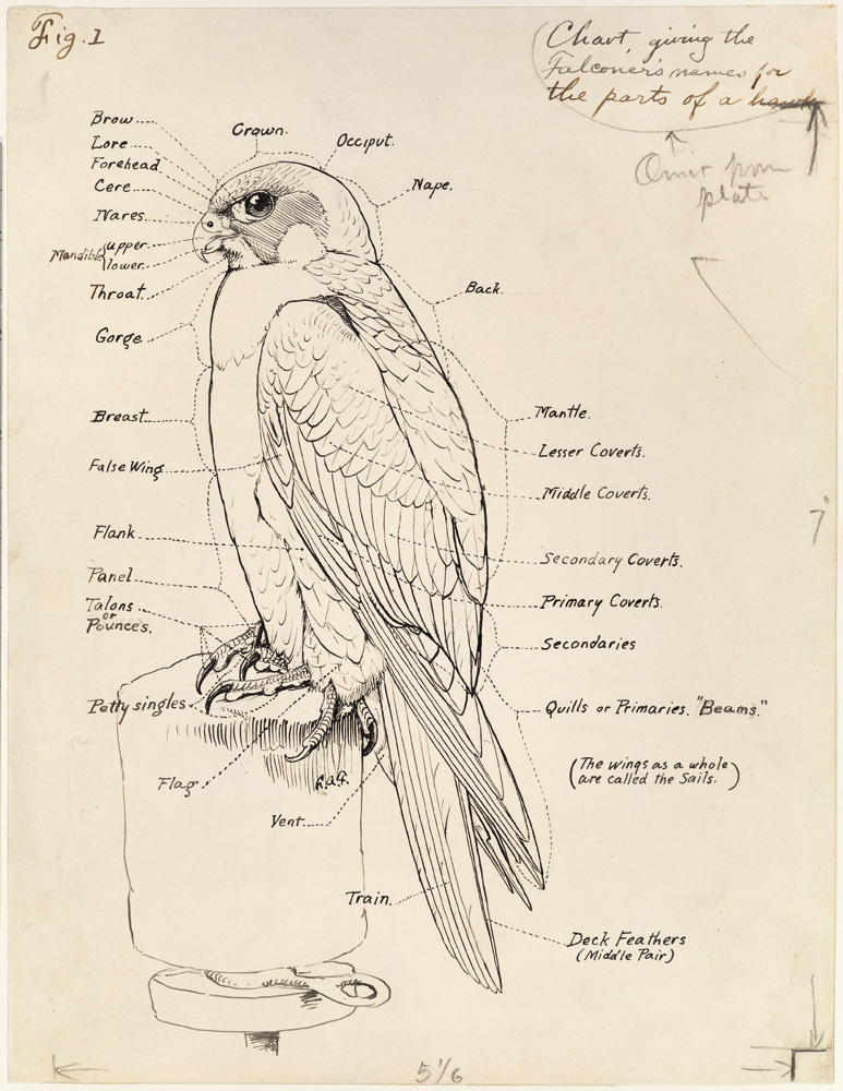 National Geographic Infographics: Bird