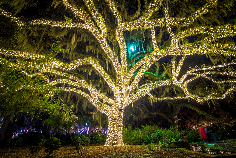 Night of a Thousand Candles - Brookgreen Gardens