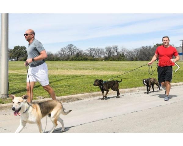 Dog Runners Program