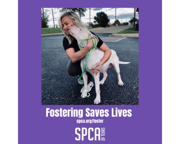 Fostering for the SPCA OF TEXAS