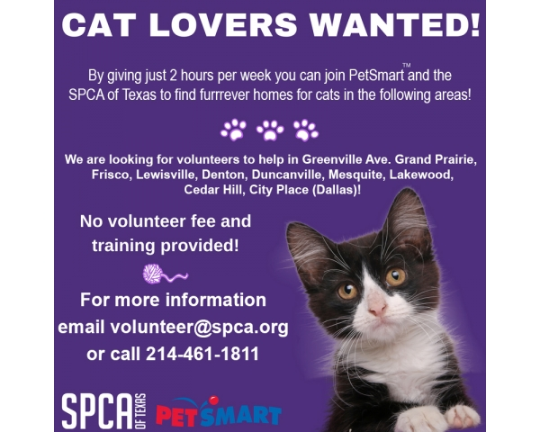 PetSmart Cat Program-SPCA of Texas- Duncanville