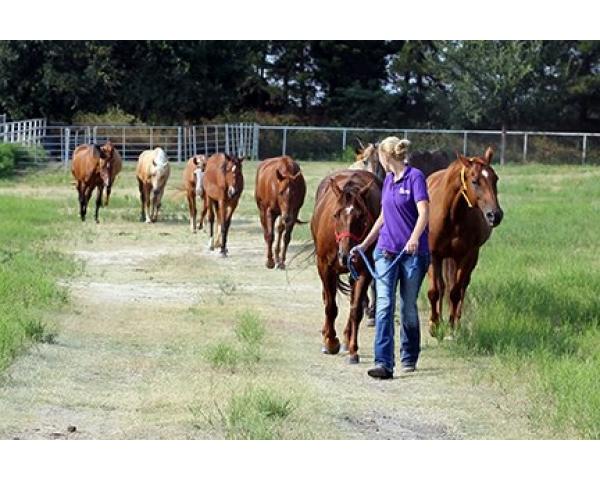 Help Rehabilitate Horses