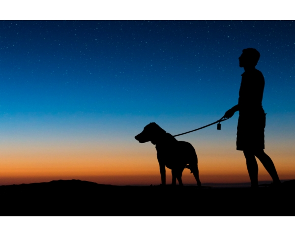 Walking dogs in the Evening