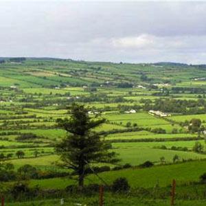 Arra View Farmstay Rental