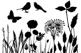 Silhouette Nature Brush Pack