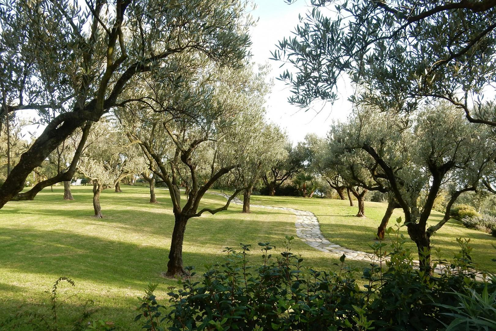 The olive grove on the property is a quiet place to appreciate these ancient trees.
