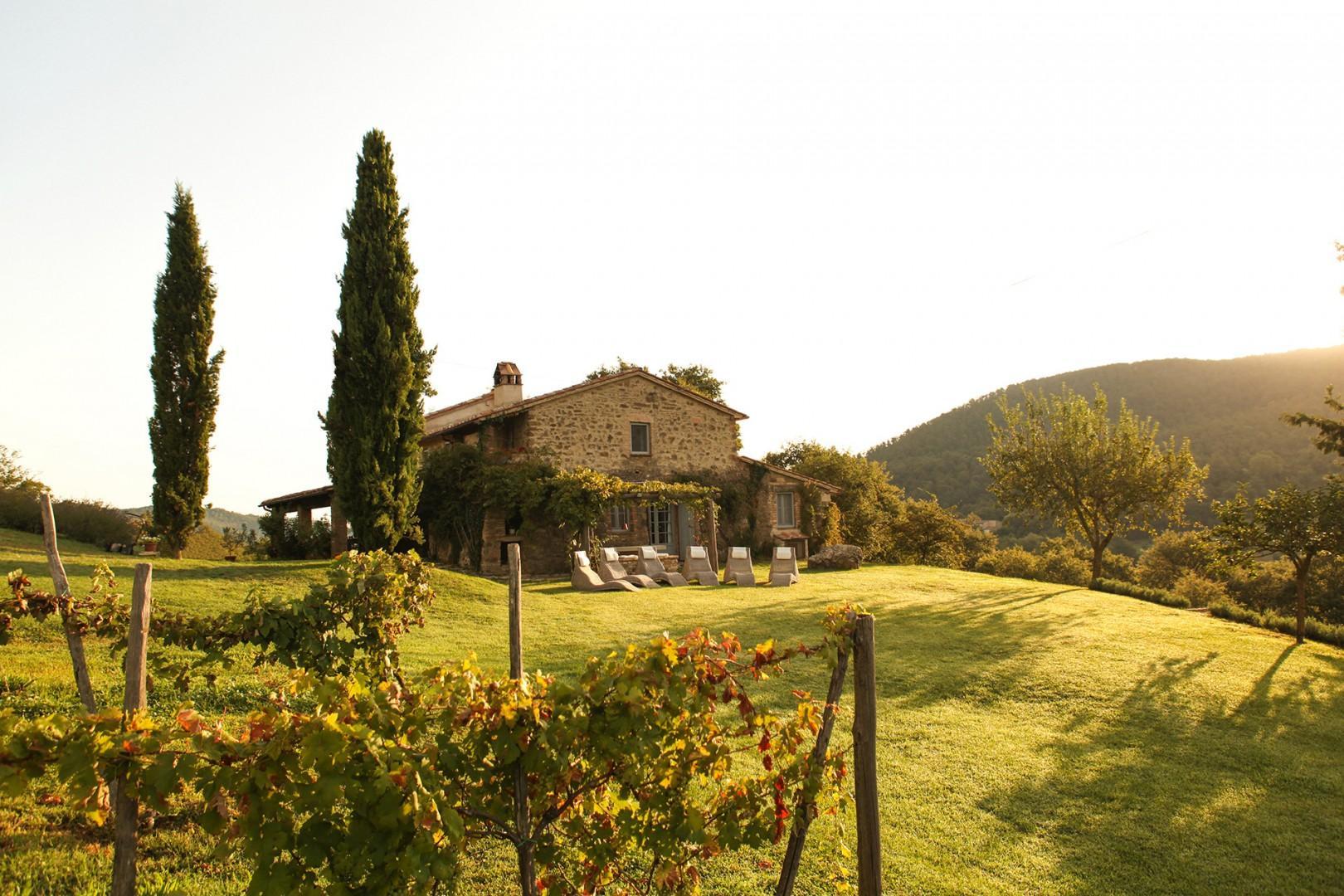 Vineyards, olive orchards, fruit trees and a kitchen garden enhance Villa Riposo Verde.
