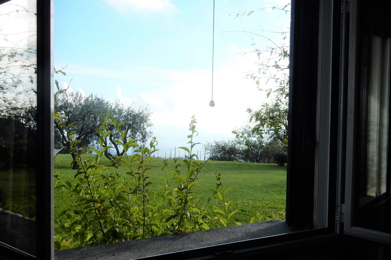 Views of the lawn and sea.