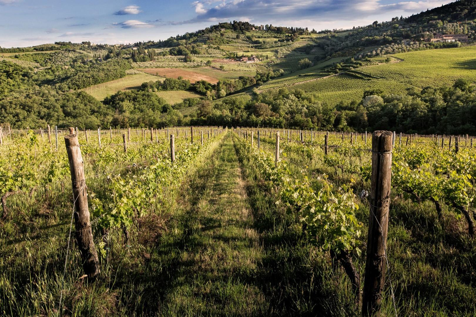 Be enchanted by the scenic views of vineyards and rolling hills that stretch out into the distance.