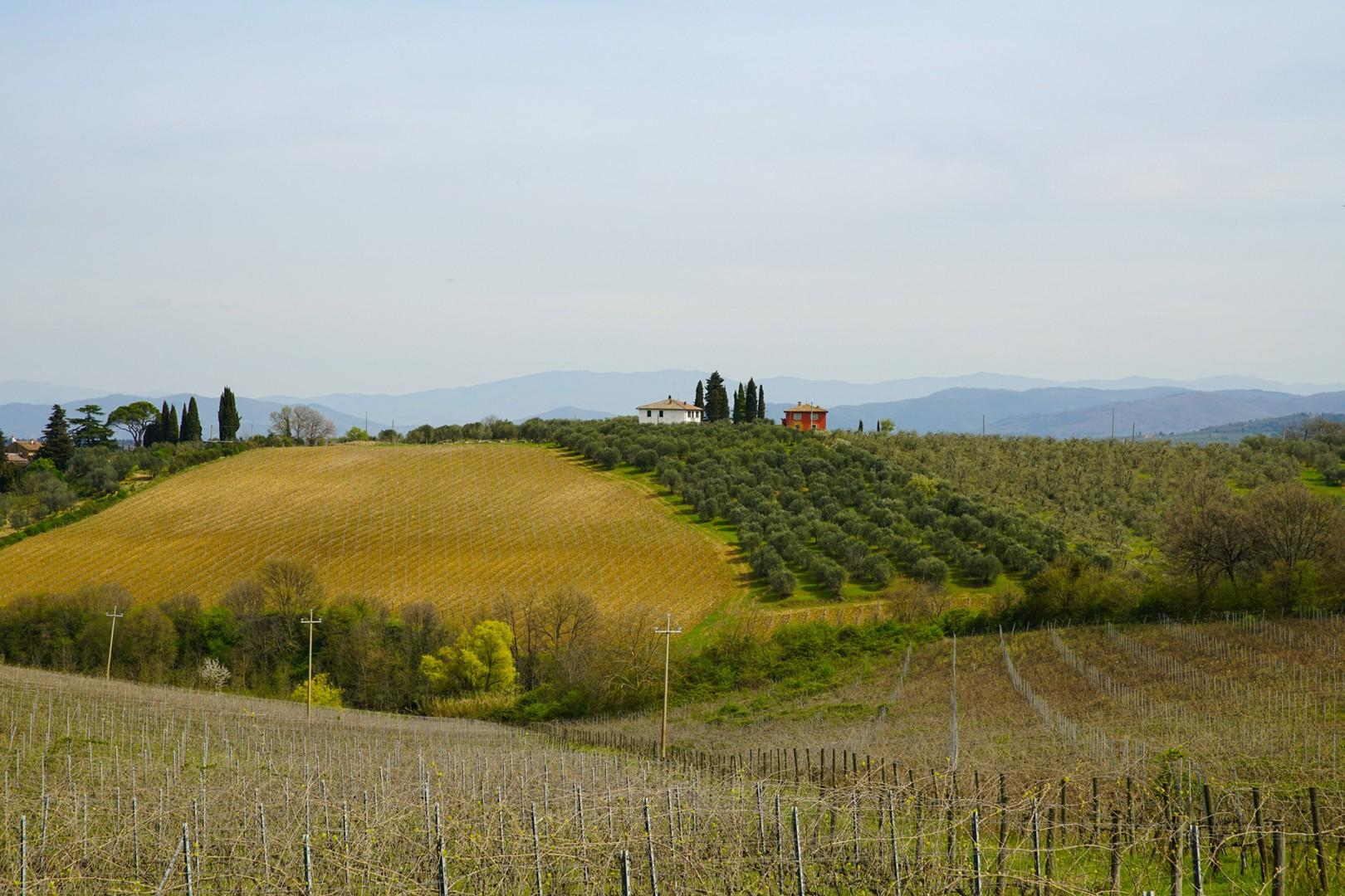 Beautiful views of the vineyards and Tuscan hills.