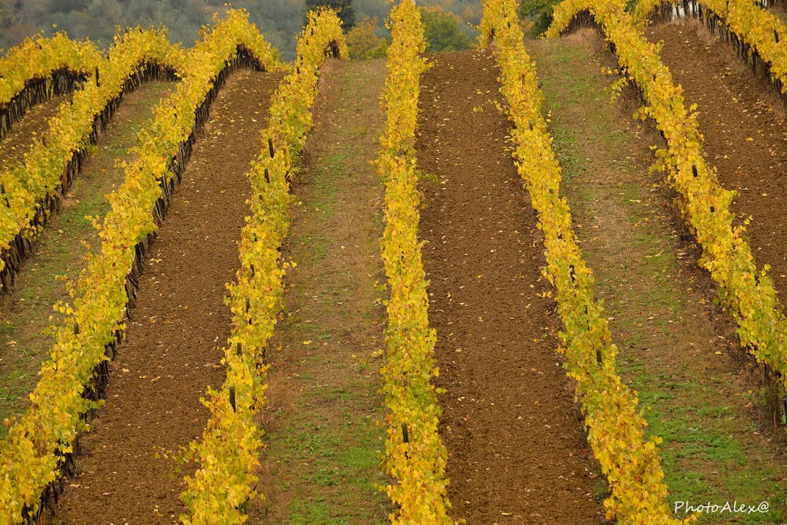 Fall is a wonderful time to visit, when the leaves turn golden in the surrounding vineyards.