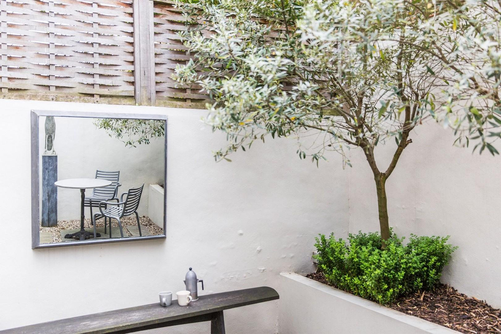 Back patio with pretty olive trees
