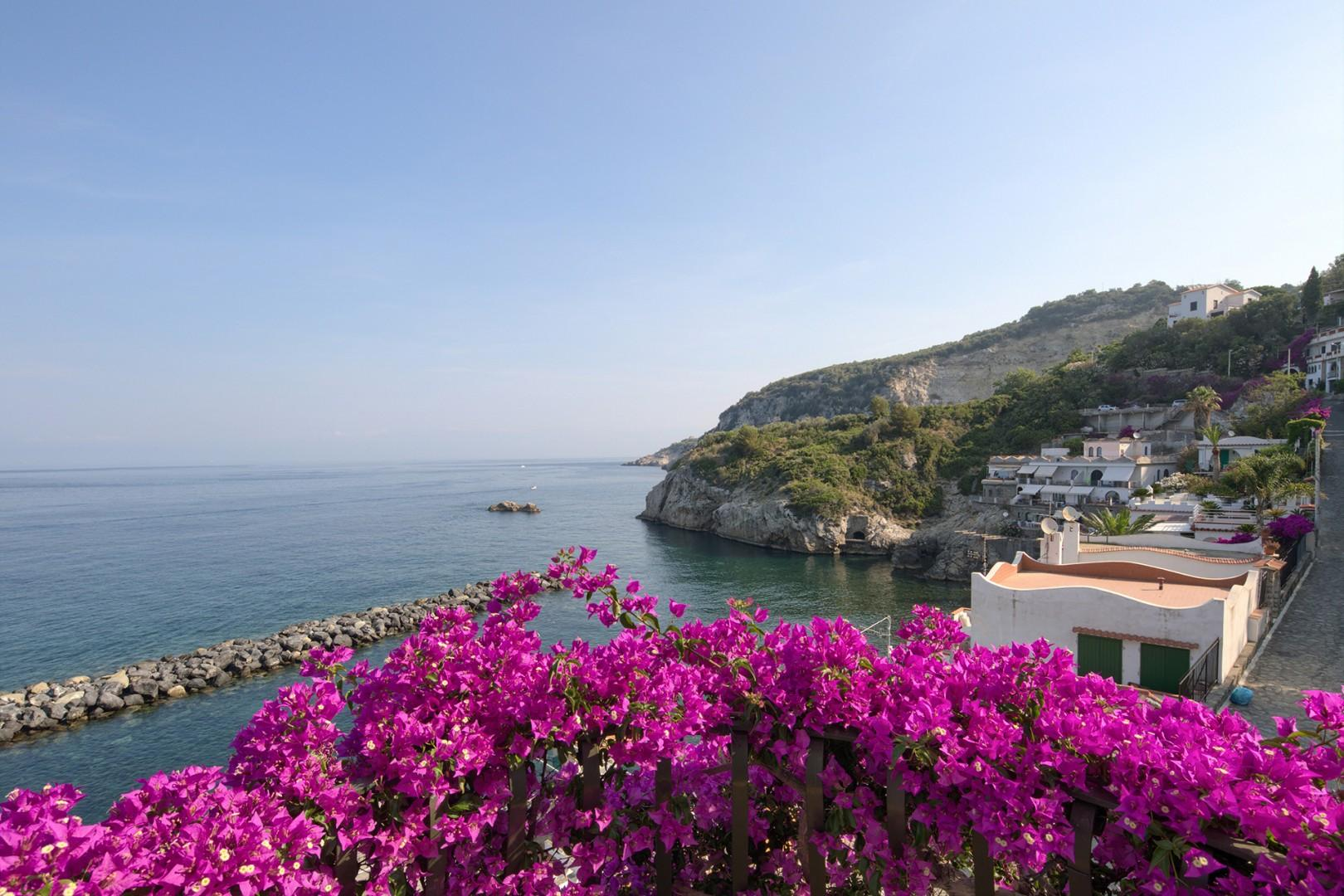 Bouganville with its purple flowers are found around the villa.