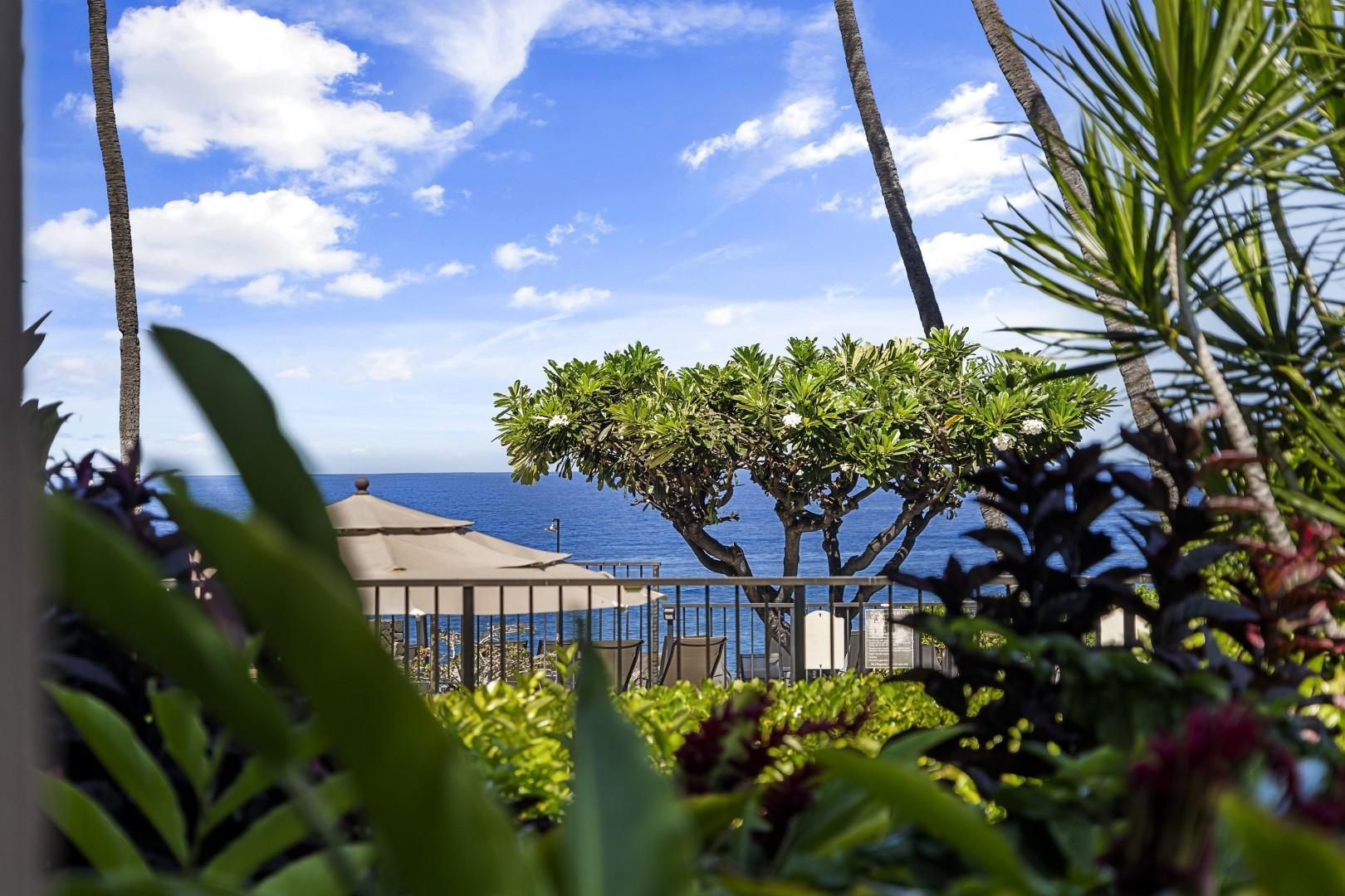 Views from the Lanai!
