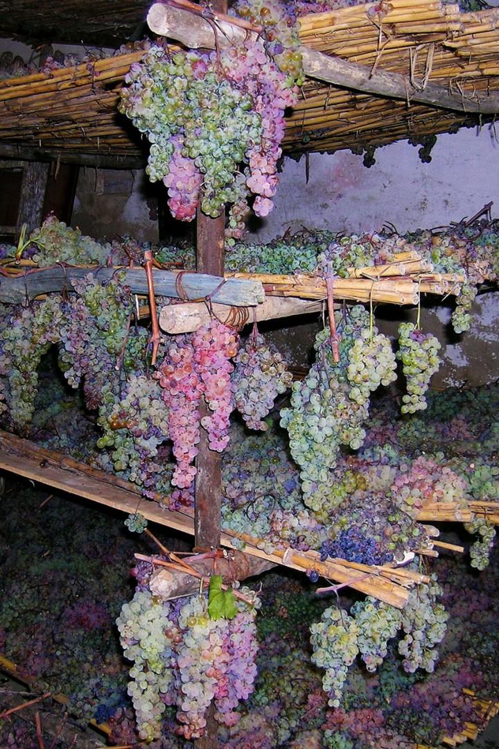 The grapes are drying for making the sweet, special Vin Santo.